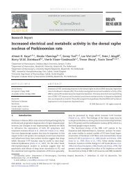 Increased electrical and metabolic activity in the dorsal raphe ...