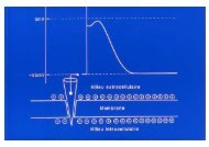 Microsoft PowerPoint - EP cellulaire Le Heuzey (NXPowerLite)