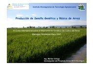 Producción de Semilla Genética y Básica de Arroz