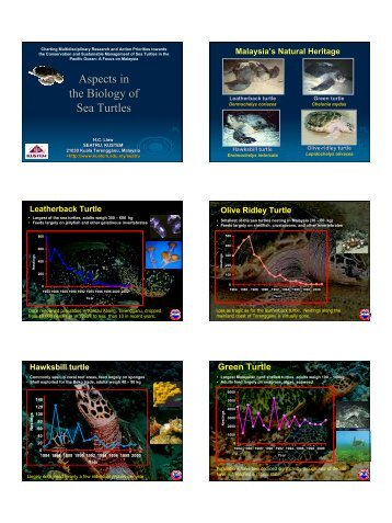 Aspects in the Biology of Sea Turtles