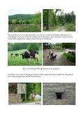 Etappe 2 Pilgern in Lippe von Schwalenberg nach Falkenhagen am ... - Seite 4