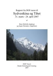 DOF in Tibet, 2007 - DOF Travel