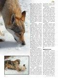 Čekoslovakų vilkšunis: girios dvasia žmogaus draugijoje - Page 3