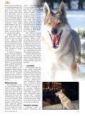 Čekoslovakų vilkšunis: girios dvasia žmogaus draugijoje - Page 4