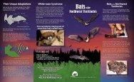 Bats of the Northwest Territories