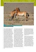 Fighting Extinction - International Takhi Group - Page 5