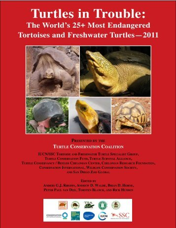 Turtles in Trouble: The World's 25+ Most Endangered - Wildlife ...