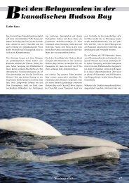 Bei den Belugawalen in der kanadischen Hudson Bay