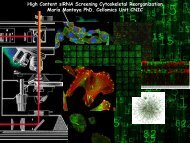 Image Analysis and Data Mining for HCS of Cytoskeletal ... - Knime