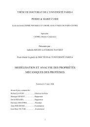 modélisation et analyse des propriétés mécaniques des protéines