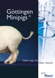 Clean pigs for clear results - Minipigs.dk