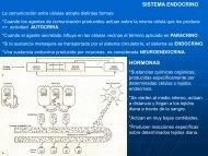 12- Sistema Endocrino
