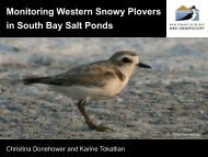 Monitoring Western Snowy Plovers in South Bay Salt Ponds: recent ...