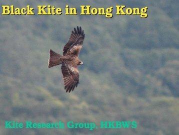 Black Kite - Hong Kong Bird Watching Society