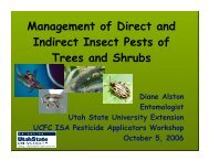 Management of Direct and Indirect Insect Pests of Trees and Shrubs