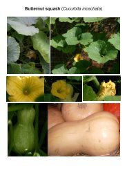 MG Food M12 Cucumber family-Cucurbitaceae 5 ... - Plantscafe.net