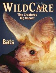 Tiny Creatures Big Impact Tiny Creatures Big Impact Bats - Wildcare