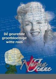 De geurende grootbloemige witte roos ' - Norma Jeane