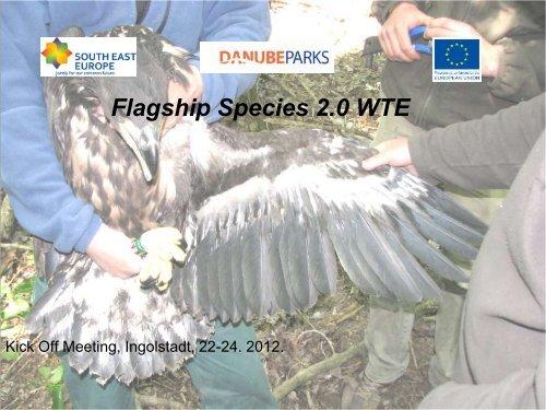 Flagship Species - White-tailed Eagle (T.Parrag) - DANUBEPARKS