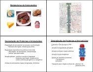 Aula - Metabolismo de aminoácidos