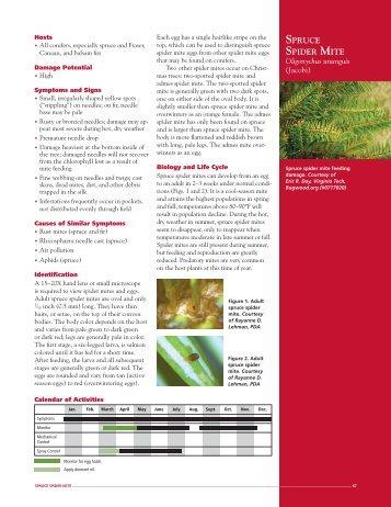 SPRUCE SPIDER MITE Oligonychus ununguis - Penn State Extension