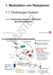1.1 Cholinerges System 1. Modulation von Rezeptoren