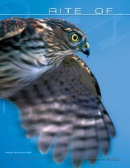 Immature sharp-shinned hawk - New Hampshire Fish and Game ...