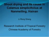 Research Institute of Tropical Forestry Chinese Academy of Forestry