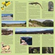 1) Monte Cocusso 2) Monte Stena 3) Sentiero di fondovalle 4 ...