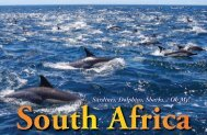 Sardines, Dolphins, Sharks... SOUTH AFRICA :: X-RAY Magazine ...