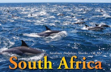Sardines, Dolphins, Sharks... SOUTH AFRICA :: X-RAY Magazine ...