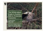 White-tailed Eagle protection measures in Austria - DANUBEPARKS