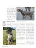 Fellfarben - Schweizer Hunde Magazin - Seite 3