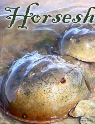 Horseshoe crabs - New Hampshire Fish and Game Department