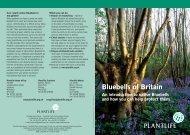 Bluebells of Britain - Plantlife