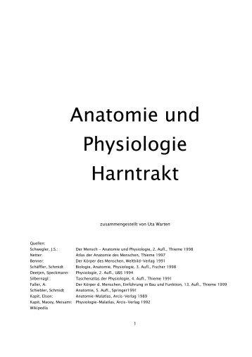 Anatomie und Physiologie Harntrakt