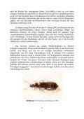Phyllodrepa melis HANSEN, 1940 - neu für die Rheinprovinz - COLEO - Seite 2