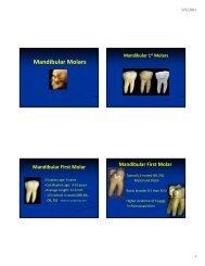 Mandibular Molars.pdf