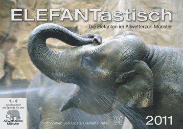 Die Elefanten im Allwetterzoo Münster