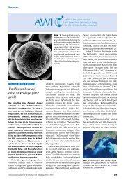 Emiliania huxleyi - Naturwissenschaftliche Rundschau