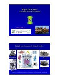 Folien vom Vortrag (pdf-Datei, 1,7 MB) - Physik am Samstag