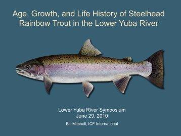 Yuba Steelheed_Mitchell - Lower Yuba River Accord
