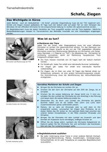 Merkblatt Tierverkehrskontrolle Ziegen / Schafe - Agate