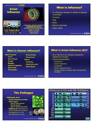 Avian Influenza What is Influenza? The Pathogen - Caribvet