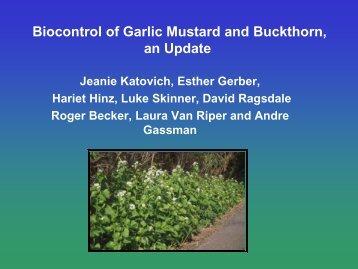 Biological Control of Garlic Mustard