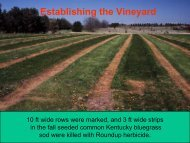 Establishing the vineyard