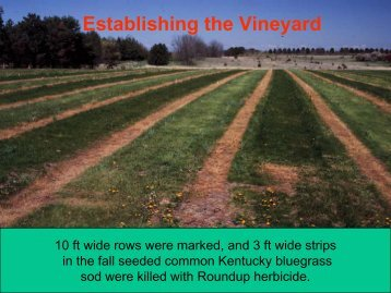 Establishing the vineyard
