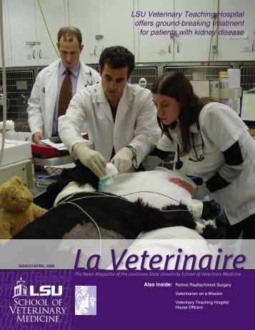 LSU Veterinary Teaching Hospital offers ground-breaking treatment ...