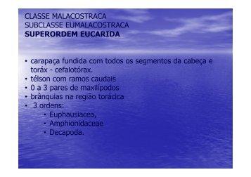 CLASSE MALACOSTRACA SUBCLASSE EUMALACOSTRACA ...