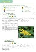rAntGroen 42 - Zuidrand - Page 6
